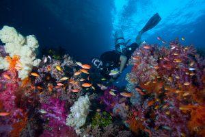 Scuba Diver in Raja Ampat Indonesia
