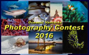 photo contest title