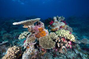Fiji, Photo by Christian Fuss
